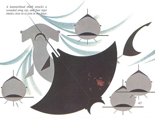 Animal Kingdom | Sharks | Charley Harper Prints | For Sale