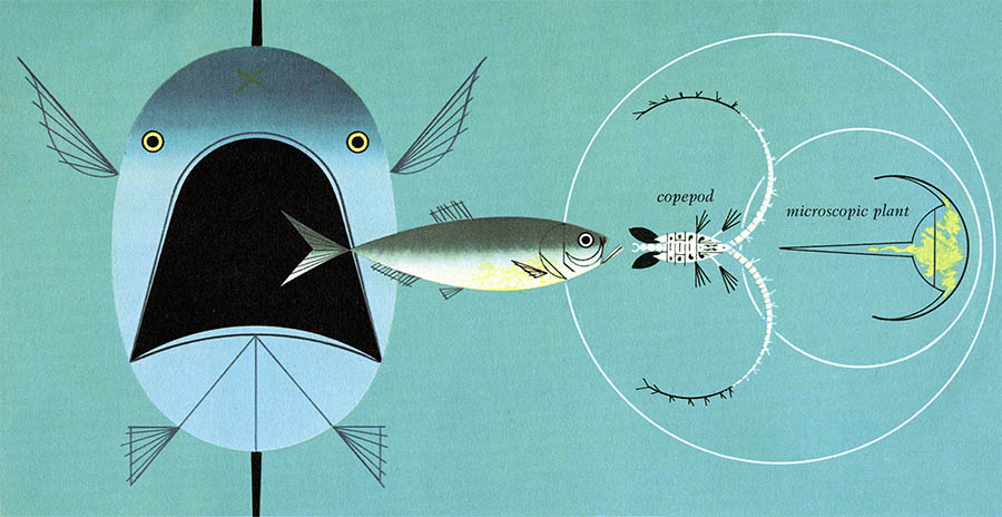 Golden Book of Biology | Harper & the Sea | Charley Harper Prints | For Sale