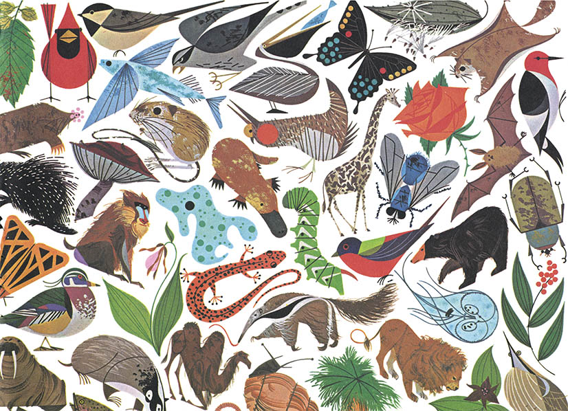 Golden Book of Biology | Charley Harper Prints | For Sale